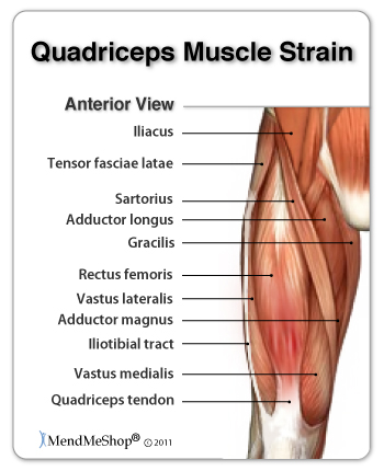 Quadricep image (front of the leg).