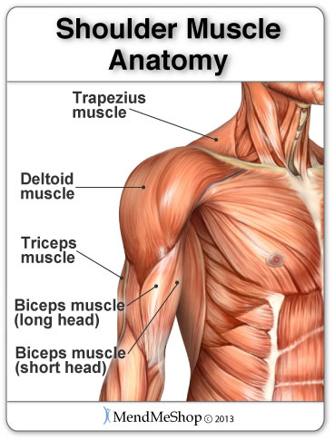 Trapezius muscle pain, strained deltoid muscle, pulled bicep muscle.